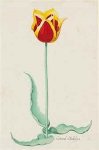 [tulips]: eight plates (8 works) by continental school (19)